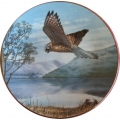 "ROYAL DOULTON  ""LORD OF THE SKY THE KESTREL""  PN34  GIFT BOXED  MIB"