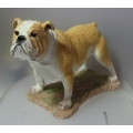 "BORDER FINE ARTS  ""BULLDOG STANDING!"" A24198  MINT IN BOX"